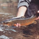 browntrout fishing