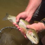 rainbown trout fishing nc