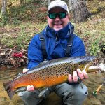 brown trout biltmore