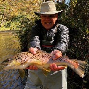 wild brown trout mills river nc